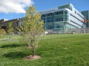 Cornell-2012-EngineeringQuad